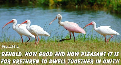 Behold, how good and how pleasant it is for the brethern to dwell together in unity.   - (Psalm 133:1)