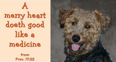 A merry heart doth good like a medicine. from Proverbs 17:22